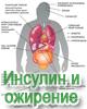 Влияние инсулина на развитие ожирения