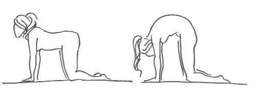 Кошка (направлено на растяжение мышц спины после усиленной работы на пресс)