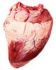 Что приготовить из говяжьего сердца