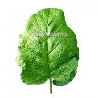 Лопух (репейник) листья