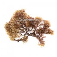 Водоросль ирландский мох (карраген)