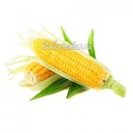 Кукуруза сладкая в початках