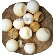 Яйцо черепашье