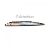 Рыба-сабля