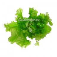 Водоросли зелёные
