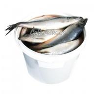 Сельдь соленая