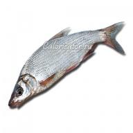 Рыбец
