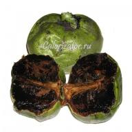Сапота (Чёрное яблоко)