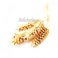 Пшеничные зерна твёрдых сортов