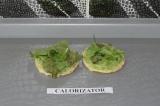 Шаг 6. Листья салата положить поверх авокадо.