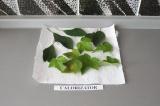 Шаг 2. Промыть листья.
