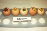 Шаг 6. Заполнить яичную скорлупу кукурузой, помидорами, курицей и листочками пет