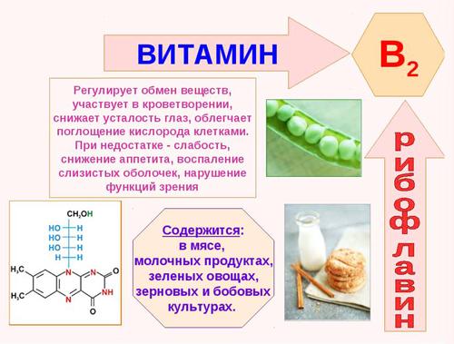 Полезные свойства витамина В2